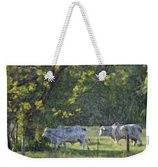 Weekender Tote Bag featuring the painting Brahma Idyl  by Carolina Liechtenstein