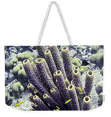 Weekender Tote Bag featuring the photograph Branching Tube Sponge by Perla Copernik