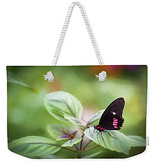 Weekender Tote Bag featuring the photograph Brave Butterfly  by Cindy Lark Hartman