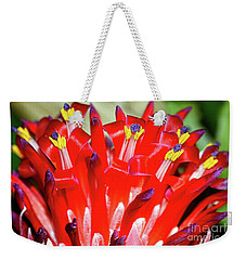 Weekender Tote Bag featuring the photograph Bright Blooming Bromeliad By Kaye Menner by Kaye Menner
