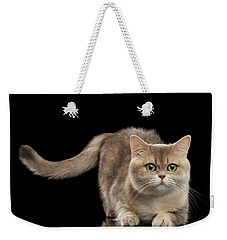 Brittish Cat With Curve Tail On Black Weekender Tote Bag