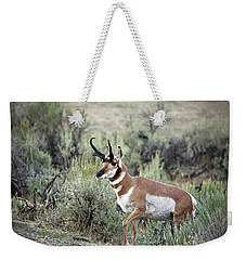 Pronghorn Buck Weekender Tote Bag