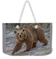Brown Bear 3 Weekender Tote Bag