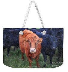 Weekender Tote Bag featuring the photograph Brown Cow by Craig J Satterlee