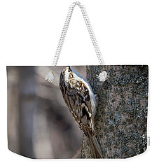 Weekender Tote Bag featuring the photograph Brown Creeper  by Ricky L Jones