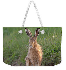 Brown Hare Sat On Track At Dawn Weekender Tote Bag