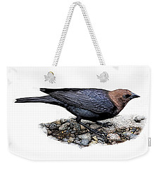 Brown Headed Cowbird Weekender Tote Bag