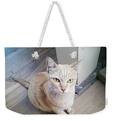 Weekender Tote Bag featuring the photograph Brunch Companion. I Couldn't Resist by Mr Photojimsf