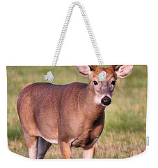 Buck Weekender Tote Bag by Debbie Stahre