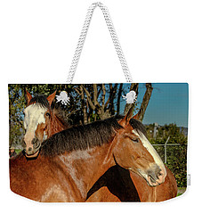 Weekender Tote Bag featuring the photograph Budweiser Clydesdales  by Bill Gallagher