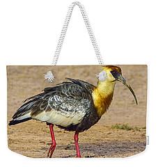 Buff-necked Ibis Weekender Tote Bag