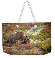 Bull Musk Ox Grazing Weekender Tote Bag