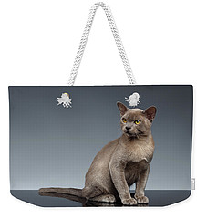 Burma Cat Sits And Loocking Up On Gray Weekender Tote Bag