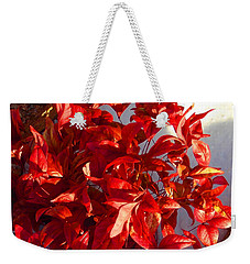 Burning Bush In Snow Enchantment Weekender Tote Bag by Anastasia Savage Ealy