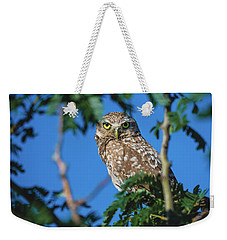 Burrowing Owl Sitting In A Tree Weekender Tote Bag