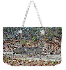 Weekender Tote Bag featuring the photograph Bushed Bobcat by Al Powell Photography USA