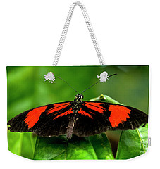 Butterfly #1955 Weekender Tote Bag by Chuck Flewelling