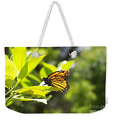 Weekender Tote Bag featuring the photograph Butterfly In Sunlight by Carol  Bradley