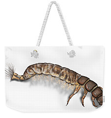 Caddisfly Larva Nymph Psychomiidae Hydropsyche Pellucidula -  Weekender Tote Bag