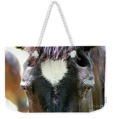 Cades Cove Horse 20160525_245 Weekender Tote Bag by Tina Hopkins