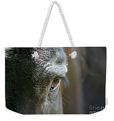 Cades Cove Horse 20160525_247 Weekender Tote Bag by Tina Hopkins
