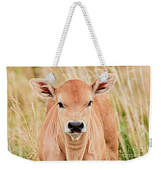 Weekender Tote Bag featuring the photograph Calf In The High Grass by Nick Biemans