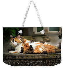 Weekender Tote Bag featuring the photograph Calico Cat by Craig J Satterlee