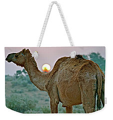 Camel Sunrise Weekender Tote Bag by Michael Cinnamond