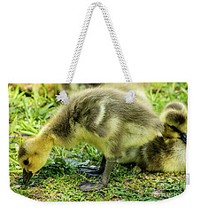 Canada Goose Gosling Weekender Tote Bag by Gary Whitton