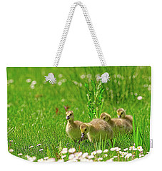 Weekender Tote Bag featuring the photograph Canada Goose Goslings In A Field Of Daisies by Sharon Talson