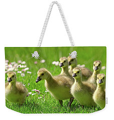 Weekender Tote Bag featuring the photograph Canada Goose Goslings by Sharon Talson