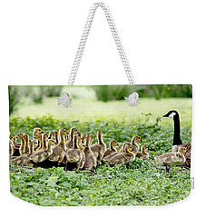 Weekender Tote Bag featuring the photograph Canada Gosling Daycare by Rona Black
