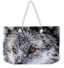 Canadian Grey Wolf In Portrait, British Columbia, Canada Weekender Tote Bag