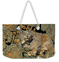 Weekender Tote Bag featuring the photograph Canadian Lynx On Lichen-covered Cliff Endangered Species by Dave Welling