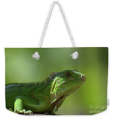 Candid Green Iguana In The Carribean Weekender Tote Bag by DejaVu Designs