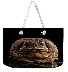 Cane Toad - Bufo Marinus, Giant Neotropical Or Marine Toad Isolated On Black Background, Front View Weekender Tote Bag