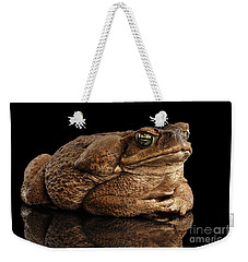Cane Toad - Bufo Marinus, Giant Neotropical Or Marine Toad Isolated On Black Background Weekender Tote Bag