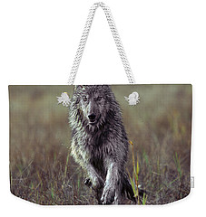 Canis Lupus Weekender Tote Bag by Tim Fitzharris