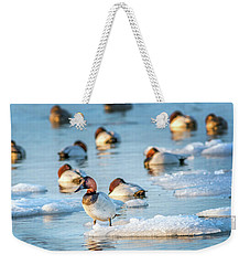 Canvasback Duck Standing On Ice In The Chesapeake Bay Weekender Tote Bag