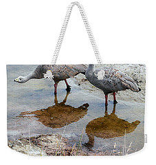 Cape Baron Geese On Maria Island 2 Weekender Tote Bag by Lexa Harpell