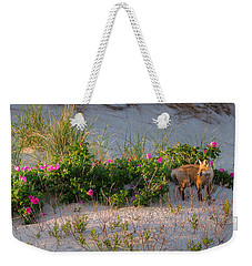 Weekender Tote Bag featuring the photograph Cape Cod Beach Fox by Bill Wakeley