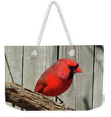 Cardinal Waiting For Spring Weekender Tote Bag
