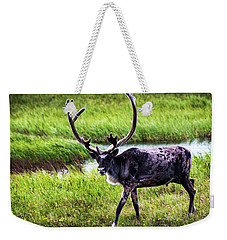 Weekender Tote Bag featuring the photograph Caribou by Anthony Jones