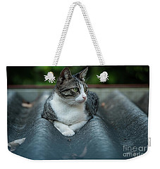 Cat In The Cradle Weekender Tote Bag