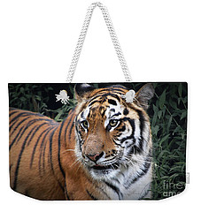 Weekender Tote Bag featuring the photograph Cat In The Jungle by Charuhas Images
