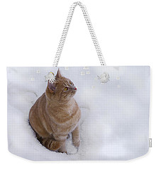 Weekender Tote Bag featuring the photograph Cat With Snowflakes by Jacqi Elmslie