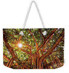 Weekender Tote Bag featuring the photograph Catch A Sunbeam Under The Banyan Tree by D Davila