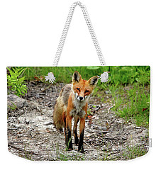 Weekender Tote Bag featuring the photograph Cautious But Curious Red Fox Portrait by Debbie Oppermann