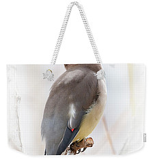 Cedar Wax Wing Weekender Tote Bag
