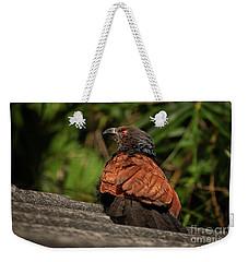 Centropus Sinensis Weekender Tote Bag